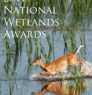 Join Trout Headwaters at the National Wetlands Awards